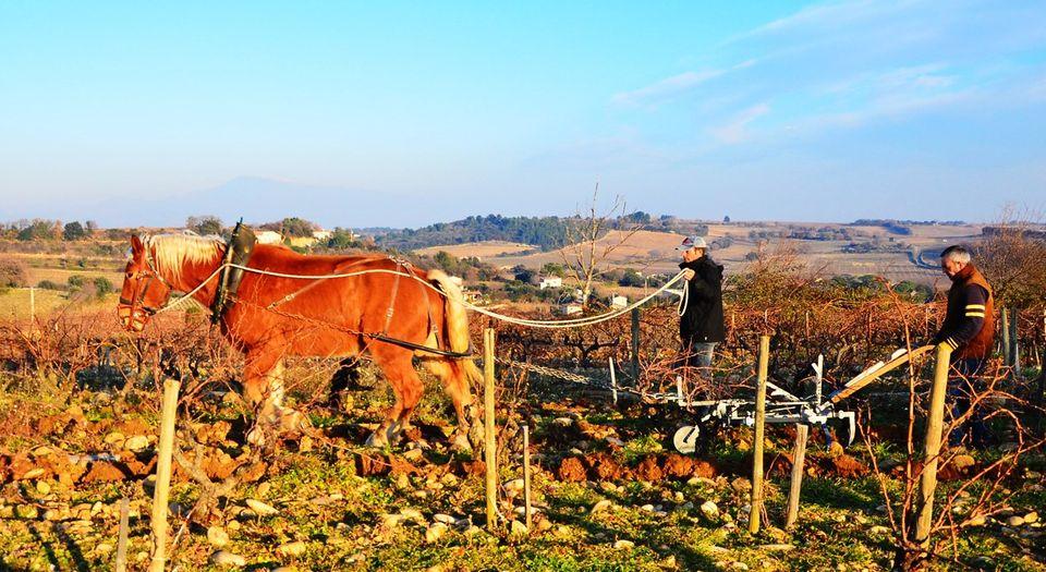 colloque Cheval en vigne : complémentarité énergie cheval tracteur