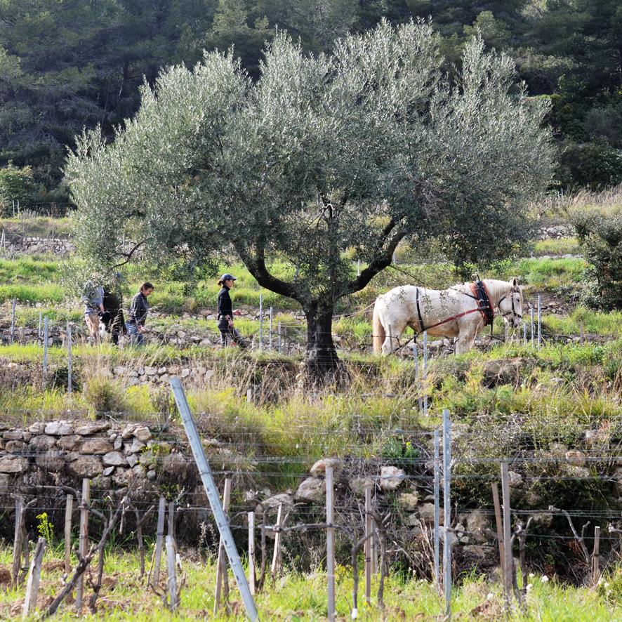 colloque Cheval en vigne